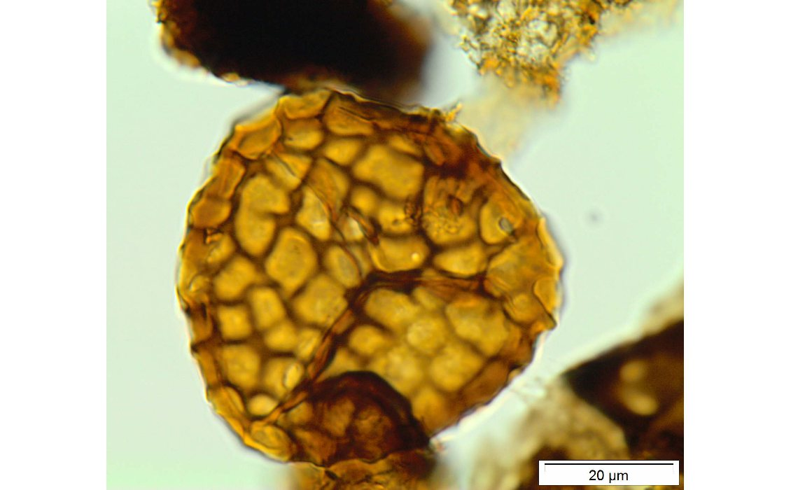 GEO ExPro - The Predictive Power of Palynology