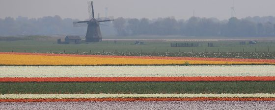 April colours in north holland windmill 1130 450 sfw thumb